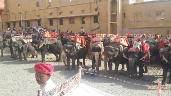 Elefantes en Amber Fort, Jaipur, India.